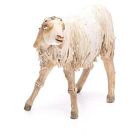 Nativity scene figurine, lying sheep 18cm, Angela Tripi s4