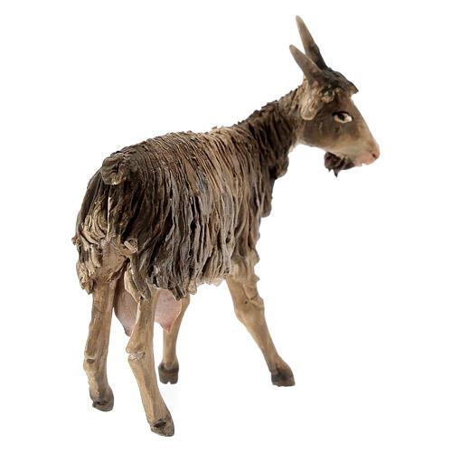 Chèvre 13cm crèche terre cuite Angela Tripi 5