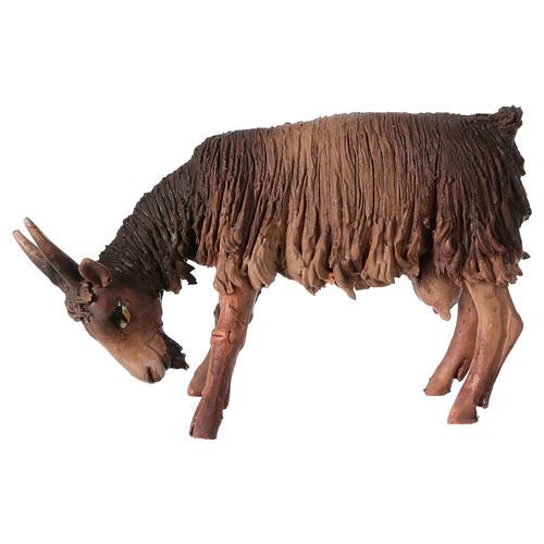 Cabra con cabeza baja Belén 13 cm Angela Tripi terracota 1