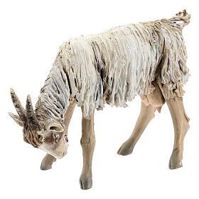 Chèvre broutant 13cm crèche terre cuite Angela Tripi s2