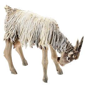 Chèvre broutant 13cm crèche terre cuite Angela Tripi s3