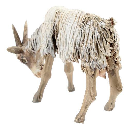 Chèvre broutant 13cm crèche terre cuite Angela Tripi 5