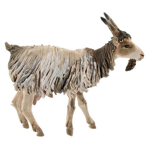 Chèvre debout 13cm crèche terre cuite Angela Tripi 1