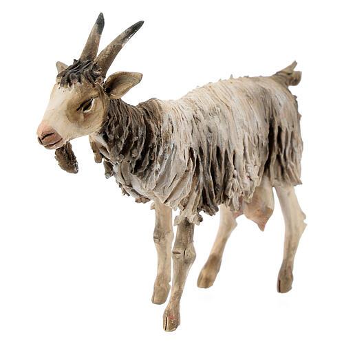 Chèvre debout 13cm crèche terre cuite Angela Tripi 3