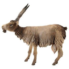 Cabra cabeza baja Belén 18 cm Angela Tripi terracota s1