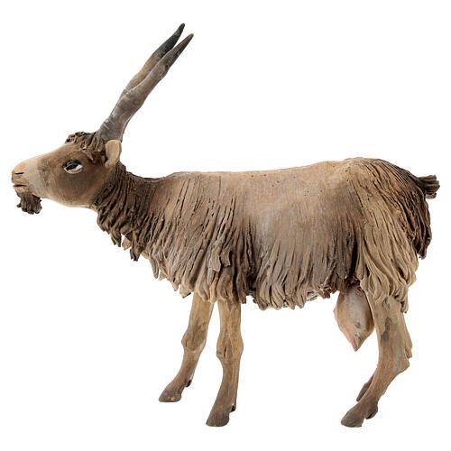 Cabra cabeza baja Belén 18 cm Angela Tripi terracota 1