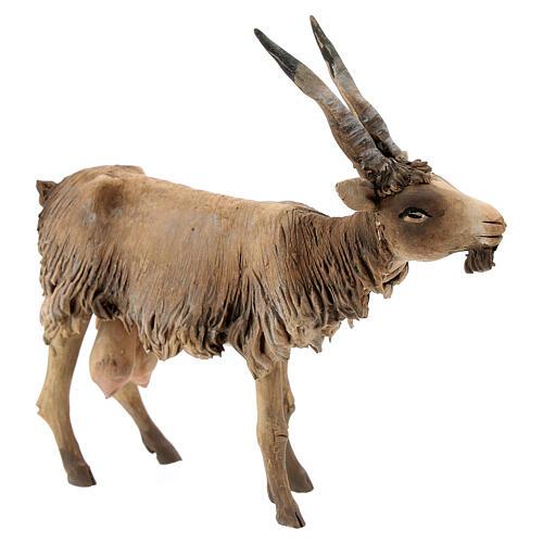 Cabra cabeza baja Belén 18 cm Angela Tripi terracota 3