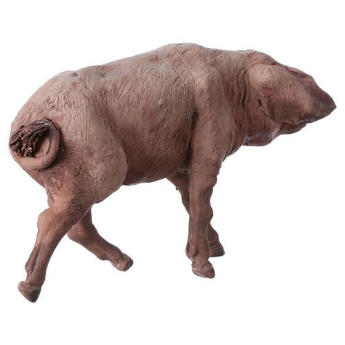 Pig in terracotta 18cm Angela Tripi 3