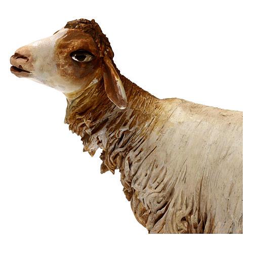 Pecorella 30 cm presepe Angela Tripi 2