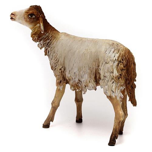 Pecorella 30 cm presepe Angela Tripi 5