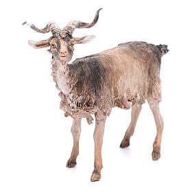Chèvre 30cm crèche Angela Tripi s4