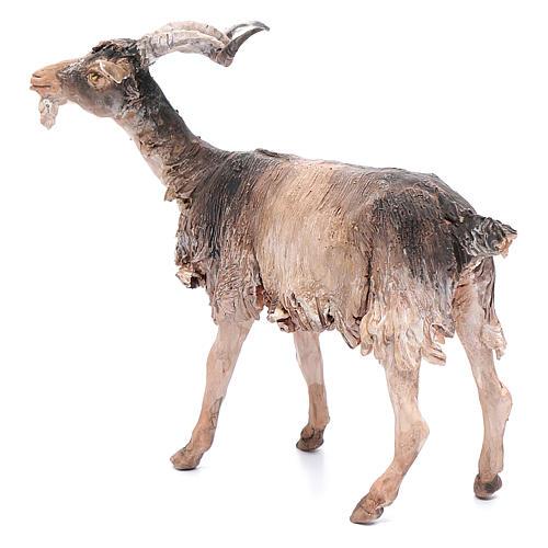 Chèvre 30cm crèche Angela Tripi 2