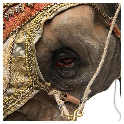 Éléphant avec Roi et serviteur crèche Angela Tripi 30 cm 11