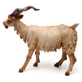 Chèvre 30 cm crèche Angela Tripi en terre cuite s4