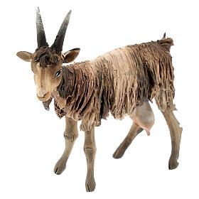 Chèvre blanche marron tête haute 13 cm Angela Tripi s2