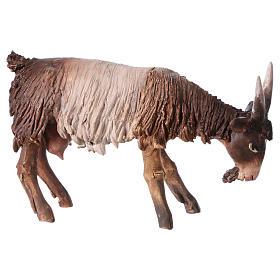Chèvre blanche marron tête baissée 13 cm Angela Tripi s2
