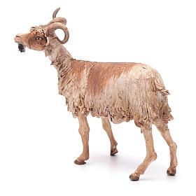 Cabra para belén 30 cm Angela Tripi s2