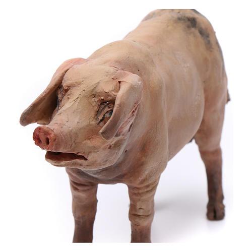 Pig for nativity scene by Angela Tripi 18 cm 2