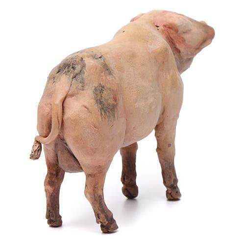 Pig for nativity scene by Angela Tripi 18 cm 3