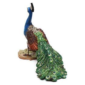 Pavone per presepe Angela Tripi 18 cm s5