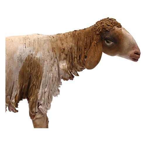 Mouton pour crèche Angela Tripi 30 cm 2