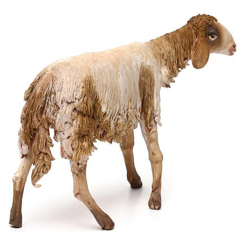 Mouton pour crèche Angela Tripi 30 cm 5