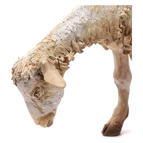 Pecorella per presepe Angela Tripi 30 cm 2