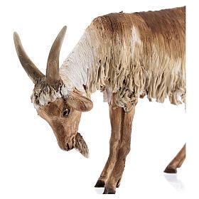 Chèvre debout 30 cm crèche Angela Tripi s2