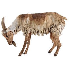Chèvre debout 30 cm crèche Angela Tripi s3