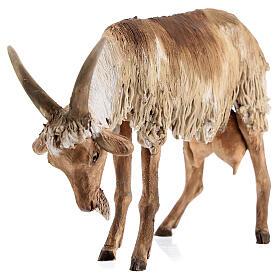 Chèvre debout 30 cm crèche Angela Tripi s4
