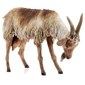Chèvre debout 30 cm crèche Angela Tripi s5