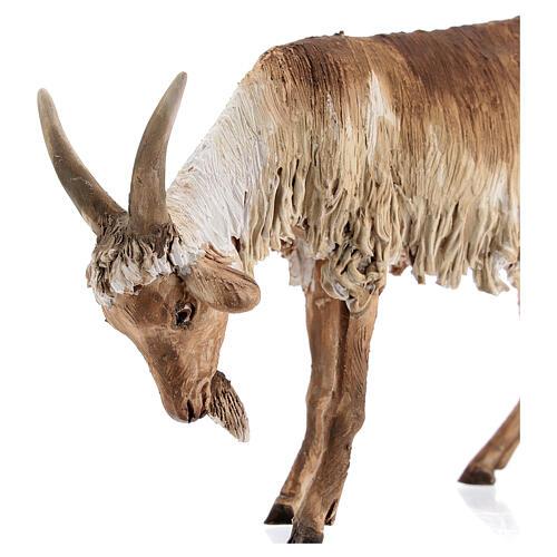 Chèvre debout 30 cm crèche Angela Tripi 2