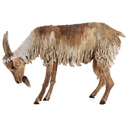 Chèvre debout 30 cm crèche Angela Tripi 3