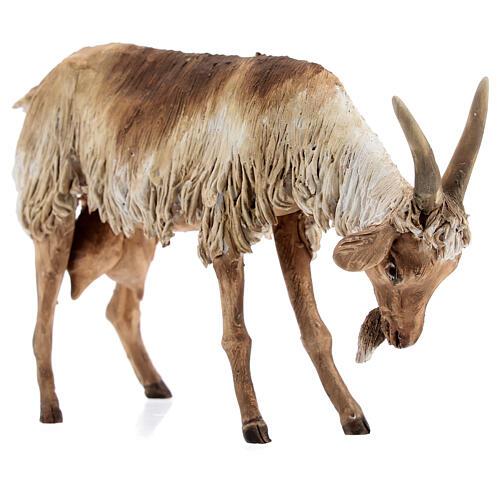 Chèvre debout 30 cm crèche Angela Tripi 5