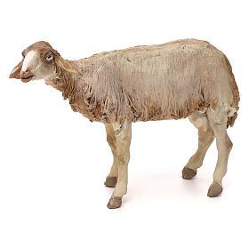Pecorella in piedi statua presepe 30 cm Tripi  s1