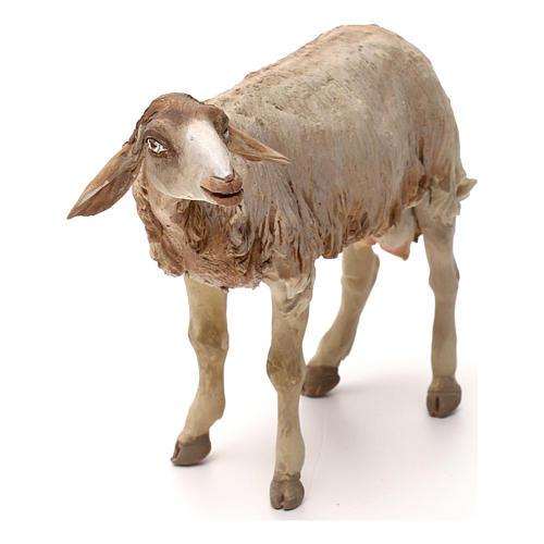 Pecorella in piedi statua presepe 30 cm Tripi  2