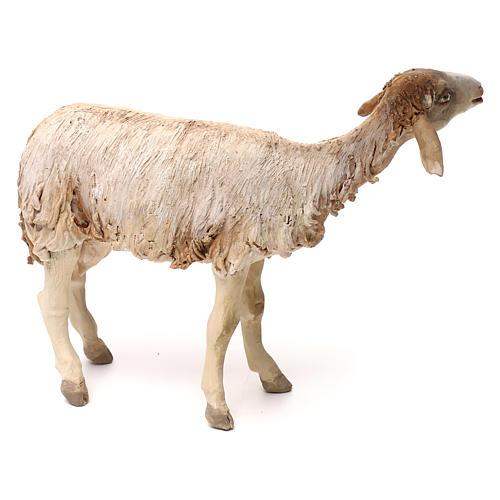 Pecorella in piedi statua presepe 30 cm Tripi  3
