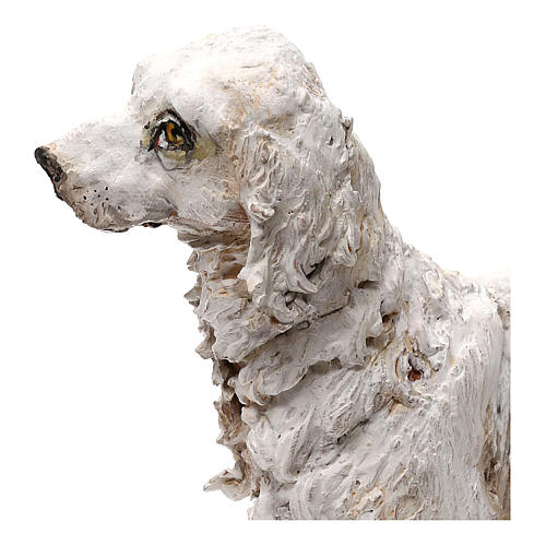 Perro 30 cm belén Tripi 5