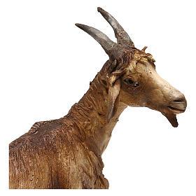 Chèvre pour crèche de 30 cm Angela Tripi s2