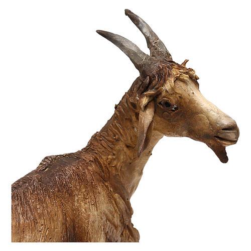 Chèvre pour crèche de 30 cm Angela Tripi 2