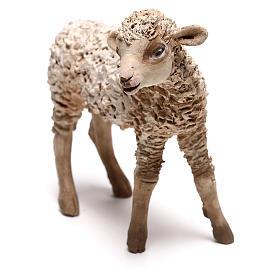 Lamb, 30 cm Angela Tripi Nativity Scene figurine s2