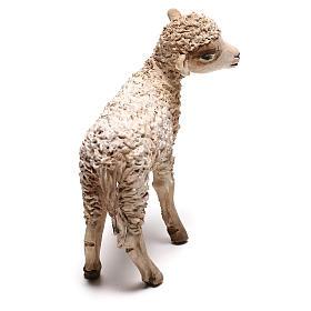 Lamb, 30 cm Angela Tripi Nativity Scene figurine s3