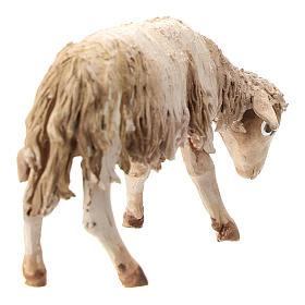Pecorella chinata 13 cm Angela Tripi s4