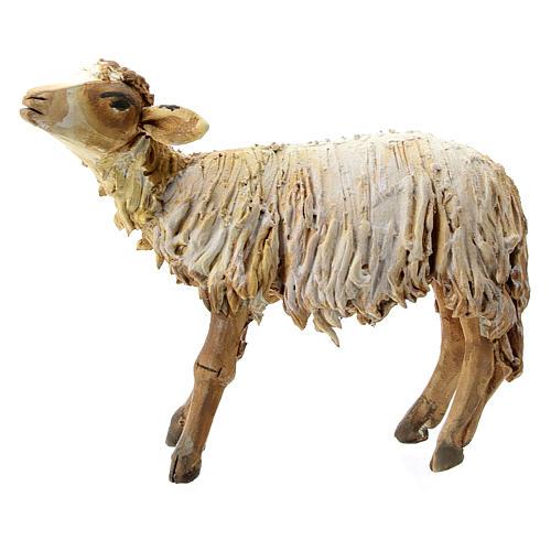 Nativity scene figurine, Sheep looking up by Angela Tripi 13 cm 1
