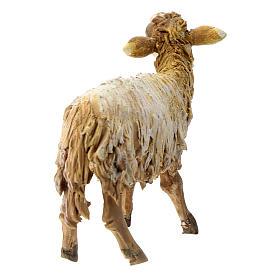 Pecorella che guarda in alto 13 cm Tripi s4