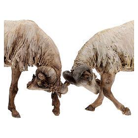 Scena caproni in lotta presepe 30 cm Tripi s2