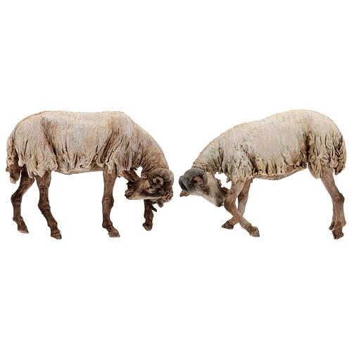 Scena caproni in lotta presepe 30 cm Tripi 1