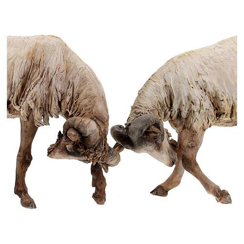 Scena caproni in lotta presepe 30 cm Tripi 2
