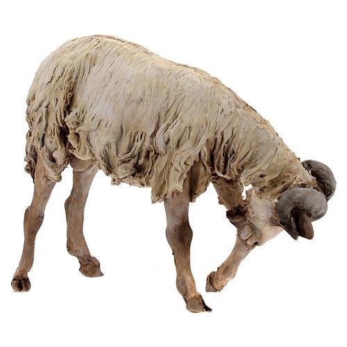 Scena caproni in lotta presepe 30 cm Tripi 4