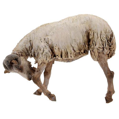 Scena caproni in lotta presepe 30 cm Tripi 6